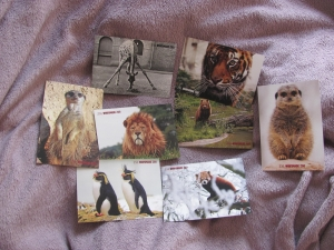 cartes postales whipsnade